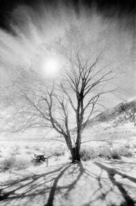 Mono Tree